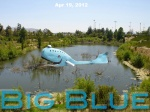 Big Blue in Small Pond-1