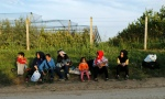 Syrian refugees - Sid Serbia