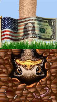 ostrich-head-in-the-ground