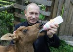 Russian Prime Minister Vladimir Putin feeds a baby elk while visiting the Losiny Ostrov national park in Moscow, Saturday, June 5, 2010. The national park, a specially protected nature territory, is Moscow's only park where wild animals live free. (AP Photo/Alexei Druzhinin, Pool)